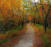 Harte Trail by Larry Trupp