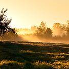 Glorious Sun 1 by Jacinthe Brault