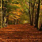 Autumn on floor by Janone