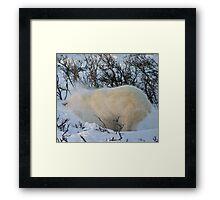 Yoga Bear shake snow Framed Print