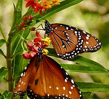 Butterflies in the Garden by Linda Gregory