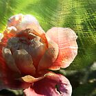Burnished Rose by FeeBeeDee