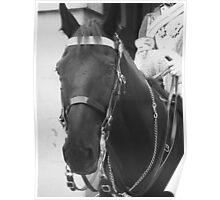A Life Guard Horse Poster
