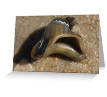 small conch shell in the sand Greeting Card