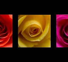 Triptych Orange Yellow & Pink Roses by Pixie Copley LRPS
