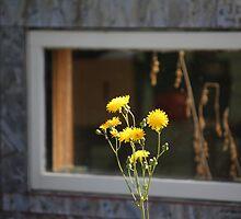 Framed! by lar3ry