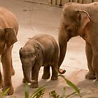 Elephants with Baby  by Kate Krutzner