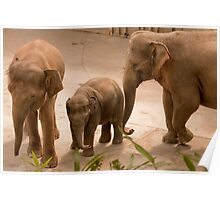 Elephants with Baby  Poster