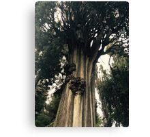 Gorgeous Old, Knotted Tree - Tivoli, Italy Canvas Print