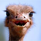 THE OSTRICH - Struthio camelus,  AND.... *What did I have for breakfast.....or lunch? by Magriet Meintjes