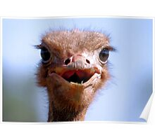 THE OSTRICH - Struthio camelus,  AND.... *What did I have for breakfast.....or lunch? Poster