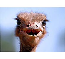 THE OSTRICH - Struthio camelus,  AND.... *What did I have for breakfast.....or lunch? Photographic Print