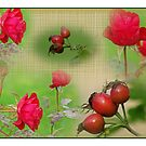 Summer´s last roses collage by Paola Svensson