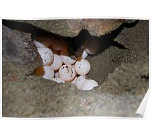 Caretta Caretta turtle Nesting Poster