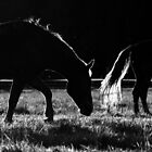 24.7.2015: Finnhorses on Pasture by Petri Volanen