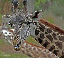 Talking Giraffe by Jeff  Burns
