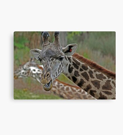 Talking Giraffe Canvas Print