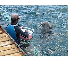 Louis the dolphin awaiting reward from trainer Photographic Print