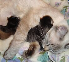 A mothers love by Peggy Burch