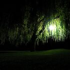 Night Willow by mikebov