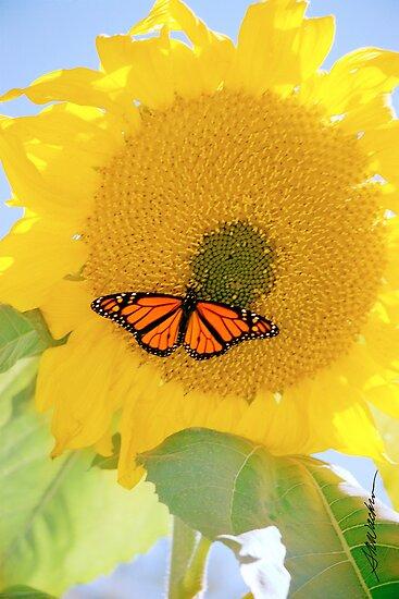 Monarch On the Sun by Susan R. Wacker