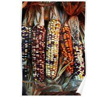 Corn Colors Poster