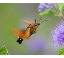 waving your wings Photographic Print