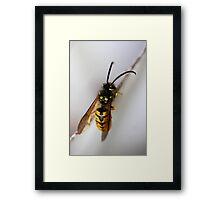 """""""The Sting ...!"""" Framed Print"""