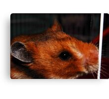 A Furry Companion Canvas Print