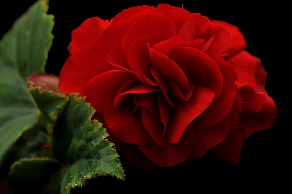 TODAYS FEATURE..~ROMANTIC RED by RoseMarie747