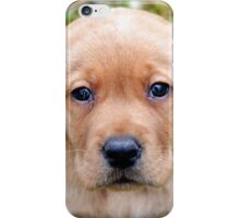 Ryder - 7 weeks  iPhone Case/Skin