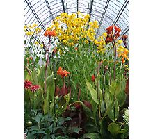 Glasshouse Flowers Photographic Print