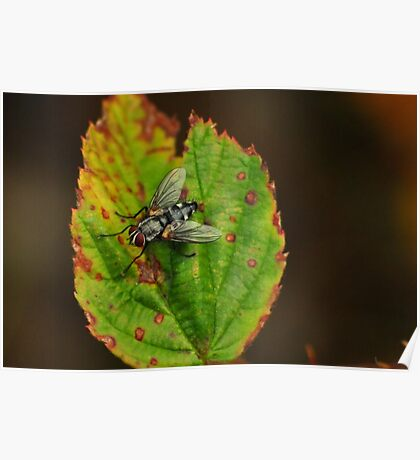 Fly on a Leaf Poster
