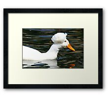 Having a Bad Feather Day Framed Print
