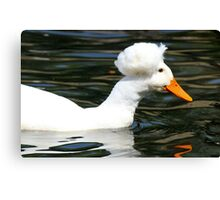 Having a Bad Feather Day Canvas Print