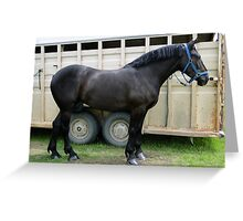 Percheron Perfection Greeting Card