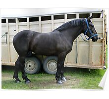 Percheron Perfection Poster