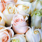 Rose'r Close'r by James Zickmantel