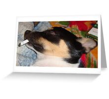 Is that dog smoking? Greeting Card
