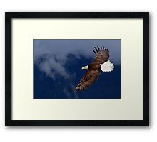 Flyin' High Framed Print