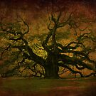The Angel Oak in Charleston SC by Susanne Van Hulst