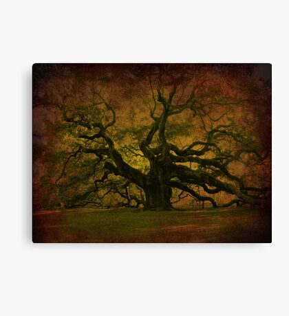 The Angel Oak in Charleston SC Canvas Print