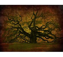 The Angel Oak in Charleston SC Photographic Print