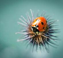 Lady Bug 1.2 by Shehan Fernando