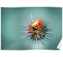 Lady Bug 1.2 Poster