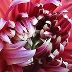 Late Summer Dahlia by Hank Eder