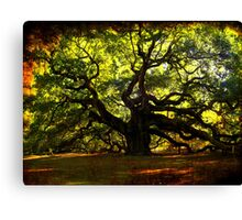 The famous Angel Oak Tree Canvas Print