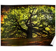 The famous Angel Oak Tree Poster