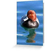 Redhead Duck ~ Male Greeting Card