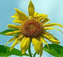 Happy Sunflower by Susan S. Kline
